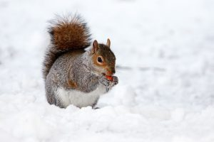 Photo of squirrel in winter