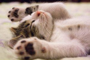 Photo of kitten sleeping