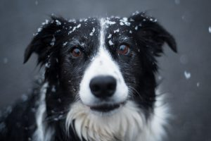 Image of dog with snow on his head