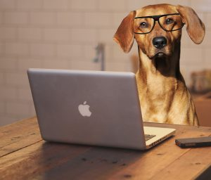 Dog with glasses at laptop