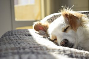 Image of a dog napping in the sun