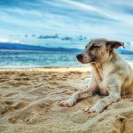 Photo of a dog laying on the beach